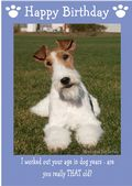 "Wire Haired Fox Terrier-Happy Birthday - ""Are You Really THAT Old"" Theme"